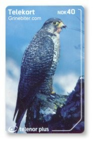 Largest Falcon