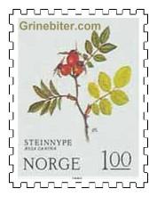 Steinnype