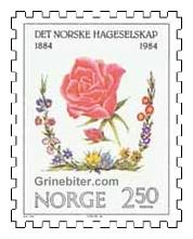 Rose og krans av blomster